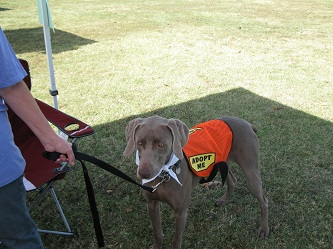 Adoptable dog at Ghost Runner 5K